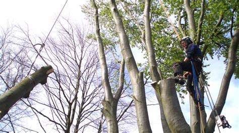 felling a tree in sections tree surgeon liverpool liverpool tree care services