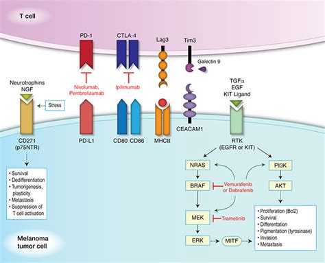 targeting pattern recognition receptors in cancer immunotherapy oncotarget overcoming resistance to targeted therapy