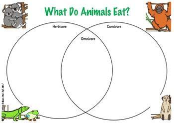 herbivore carnivore omnivore venn diagram herbivore omnivore and carnivore venn diagram by miss bollen s store