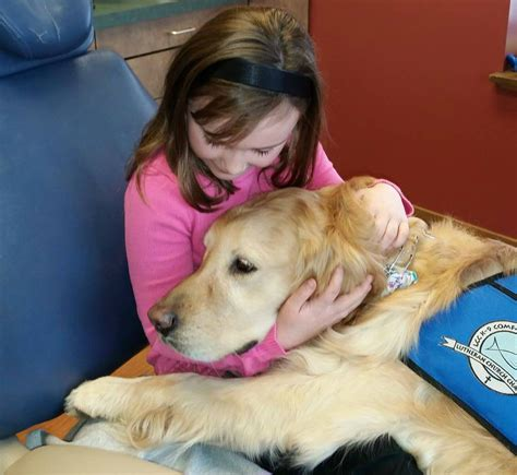 what is a comfort dog meet jojo the only dental comfort dog assistant