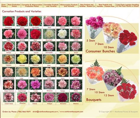 carnation color meanings carnation varieties pink white yellow