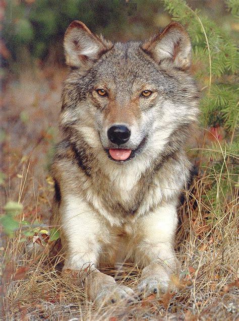 coyote hybrid peering htm