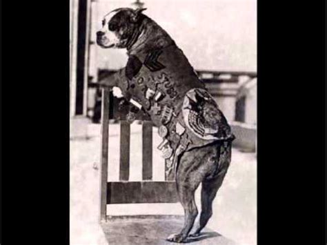 Sgt Stubby Pitbull Sergeant Stubby World War I Wmv