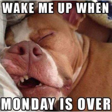 Monday Meme - 20 dog pictures that sum up your hatred of mondays