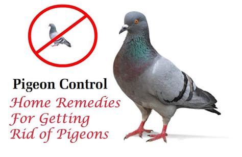 how to keep birds away swallows invading your home how to