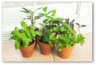 Indoor Vegetable Gardening Home Design Elements Indoor Vegetable Container Gardening
