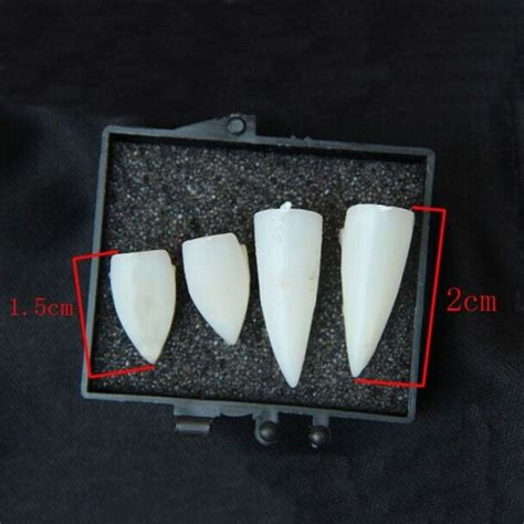 Tooth Decorations by 2 Set Decoration Tooth Horror False