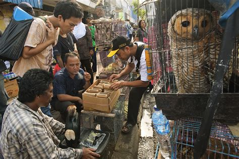 Beruang Thailan fatwa issued against wildlife trafficking