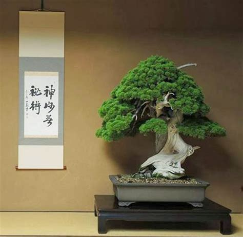 old bonsai tree old bonsai ancient trees bonsai bark