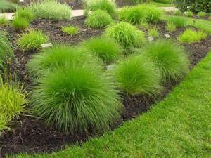 types of ornamental grasses diy garden projects