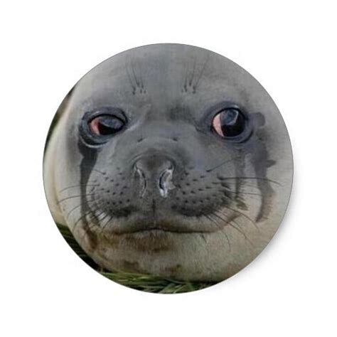 Seal Meme - crying seal meme cough your lungs out round sticker zazzle