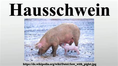 haus schwein hausschwein