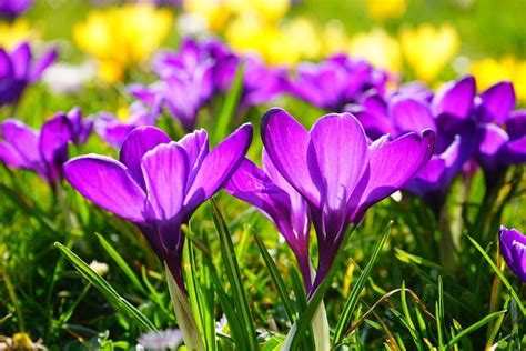 spring equinox 2018 when is first day of spring why first day of spring vernal equinox 2018 the old farmer