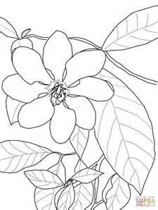 Gardenia Flower Drawing Gardenia Carinata Coloring Drawing Flowers