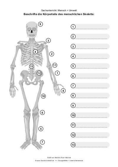Arbeitsblatt Skelett Des Menschen gallery - zalaces ...