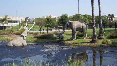 miss history travels to la tar pits museum books discovering the la quot tar pits quot american gas