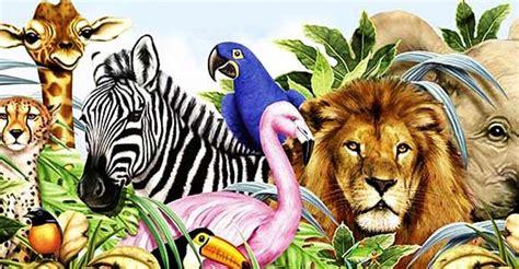 imagenes reino animal reino animalia www pixshark com images galleries with