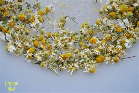 essiccare fiori conservare le erbe spontanee fiori e piante aromatiche