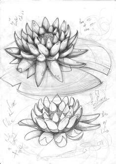 How to draw a water lily and pad | Step by step Drawing