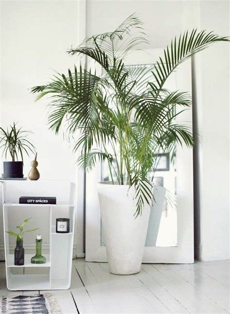 biar gak pengap coba rawat  tanaman   kamar kosmu