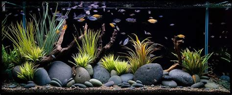 aquarium design group goldfish aquarium design group my mbuna cichlid dream pinterest