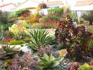 best 25 succulent landscaping ideas on pinterest
