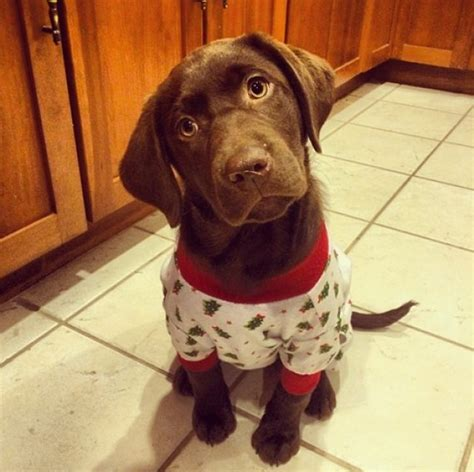 puppy in pajamas these snuggly puppies in pajamas will make you want to crawl back into bed huffpost