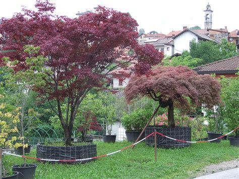 alberi ornamentali per giardino piante ornamentali da giardino floricoltura zonta