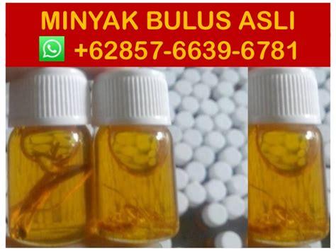 Jual Minyak Bulus Bali jual minyak bulus putih hub 0857 6639 6781 whatsapp