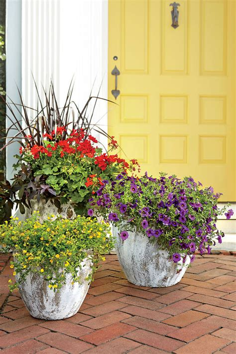 Heat Tolerant Flowers For Planters by Heat Tolerant Container Gardens For Sweltering Summers
