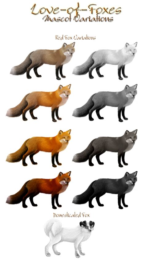 fox colors contest entry of foxes mascot variation by