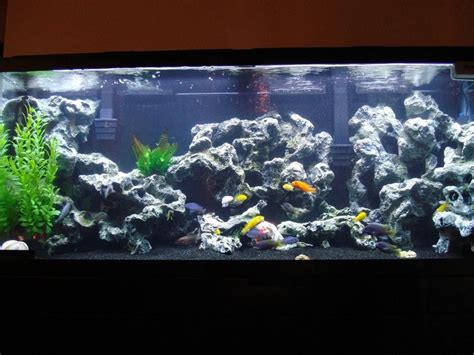 aquarium design with black sand fresh water tank with black gravel animals pinterest