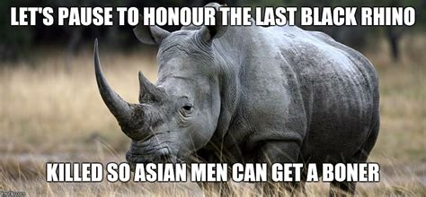 Rhino Memes - the african black rhino is officially extinct imgflip