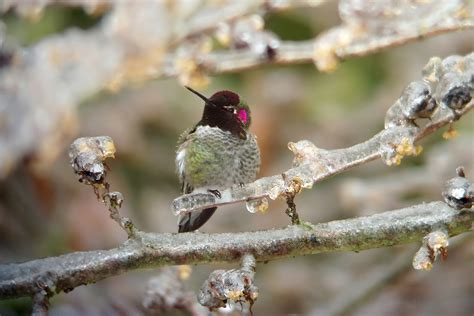 how to keep that hummer feeder going in freezing weather