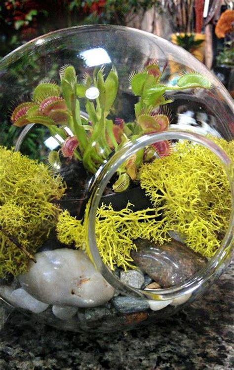 exotic plants ideas  pinterest