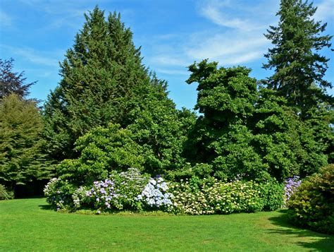 Garden Trees by File Vandusen Botanical Garden 4 Jpg Wikimedia Commons