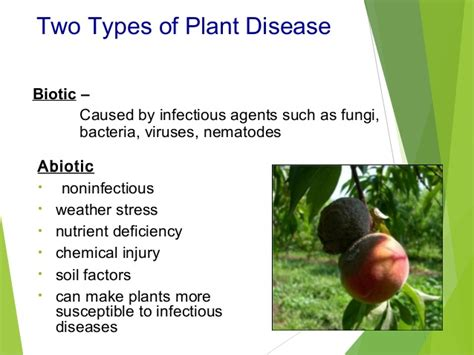plant disease impact factor diseases of fruits and vegetables