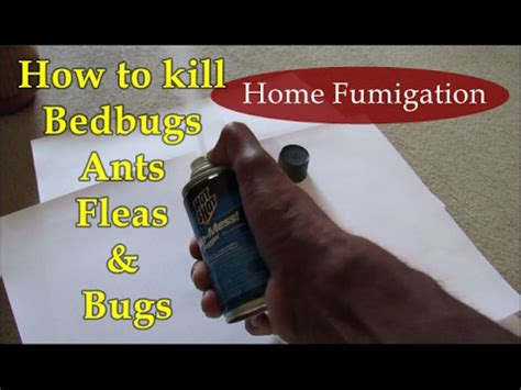 what kills bed bugs instantly bed bugs and fleas inspiration bed bugs vs fleas
