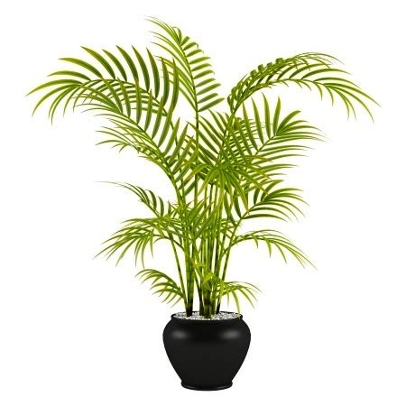 Indoor Palm by Gallery For Gt Small Indoor Palm Trees