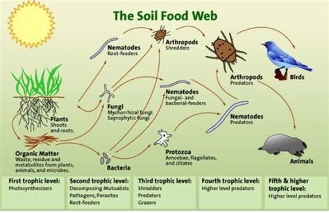 backyard food web probiotics for the soil brew your own local indigenous
