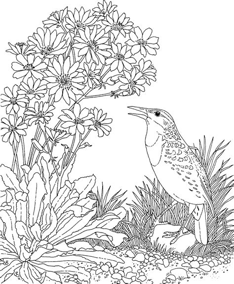 printable coloring pages of birds and flowers free printable coloring page montana state bird and
