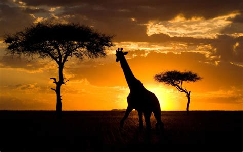 In Kenya things to do in kenya customize your trip with vacay