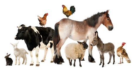 large animal vet care redmond or animal hospital