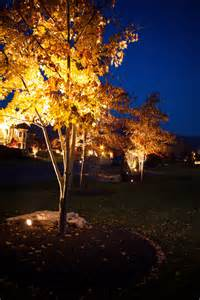 low voltage tree lights evening shadows lighting