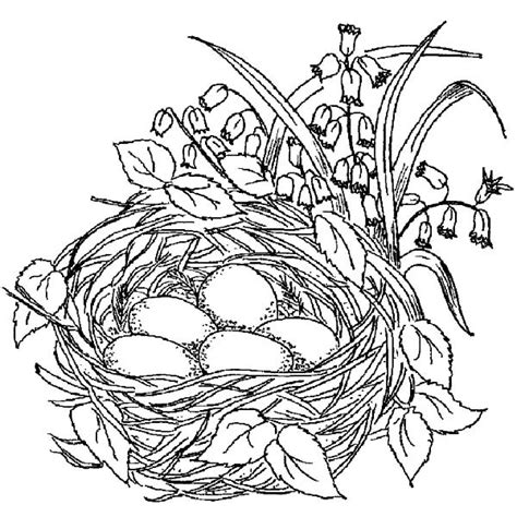 coloring pages of birds in trees free coloring pages of birds nest on a tree