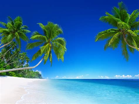 wallpaper beach tropical sunny beautiful  nature