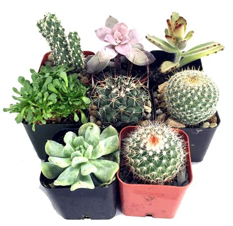 56th annual sacramento cactus and succulent show may 7 8