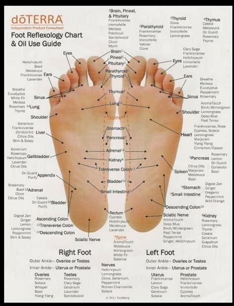 the essential hoof book the complete modern guide to anatomy care and health disease diagnosis and treatment books foot reflexology chart use guide by my business