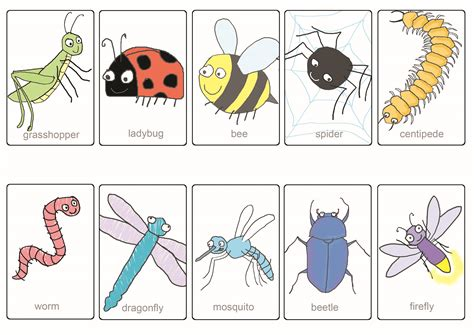 printable insect flash cards articulation360 activities printables and games for