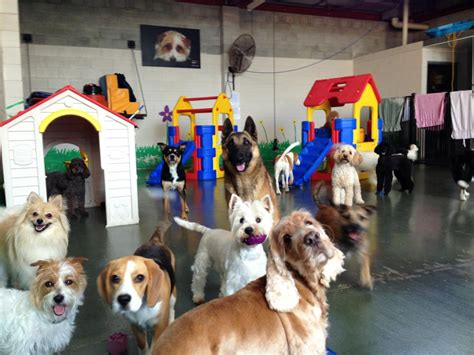 puppy day care 24 hour day care south west brisbane